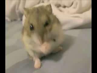 可爱小动物们的贪食镜头