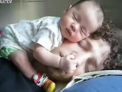 英国斗牛犬宝宝睡觉 超可爱