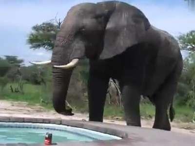大象牙膏是什么意思 图片合集