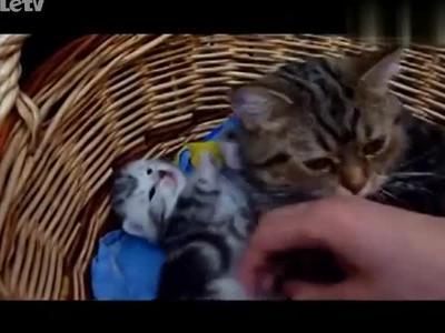 猫妈妈拥抱孩子