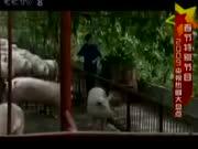 电视剧《金色农家》片段