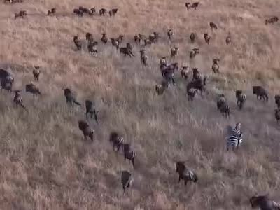 非洲动物迁徙- 在线观看