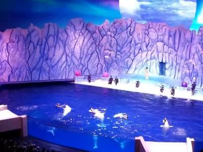 珠海海洋王国-白海豚1