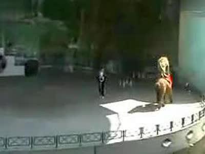 马戏团的动物表演- 在线观看
