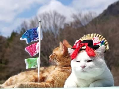 猫叔与小伙伴卖萌装扮过儿童节