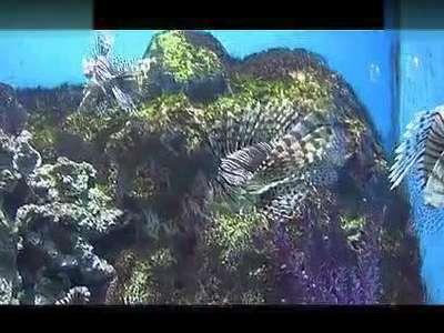 美丽的海洋世界_高清