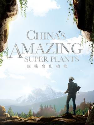 探秘高山植物